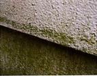 防カビ・防藻バイオ塗装